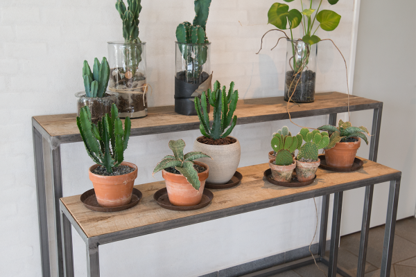 Langborde, podier med planter.
