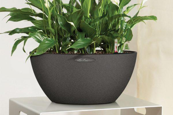 grå potte