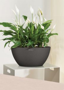 antrazit grå potte