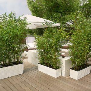 hvide kasser, bambus