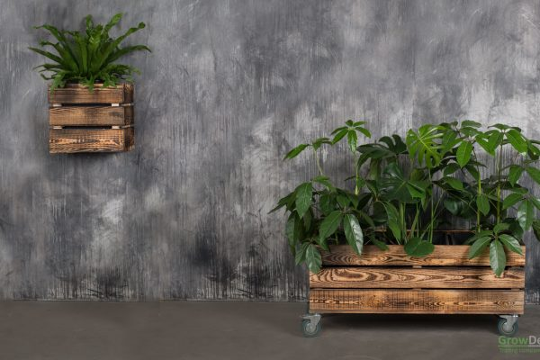 Trækummer, grønne planter