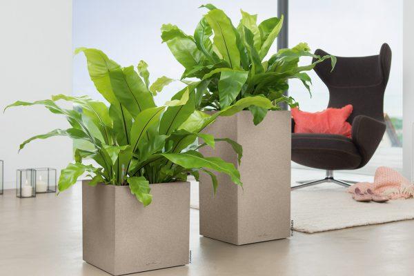 Krukker, grønne planter, stol
