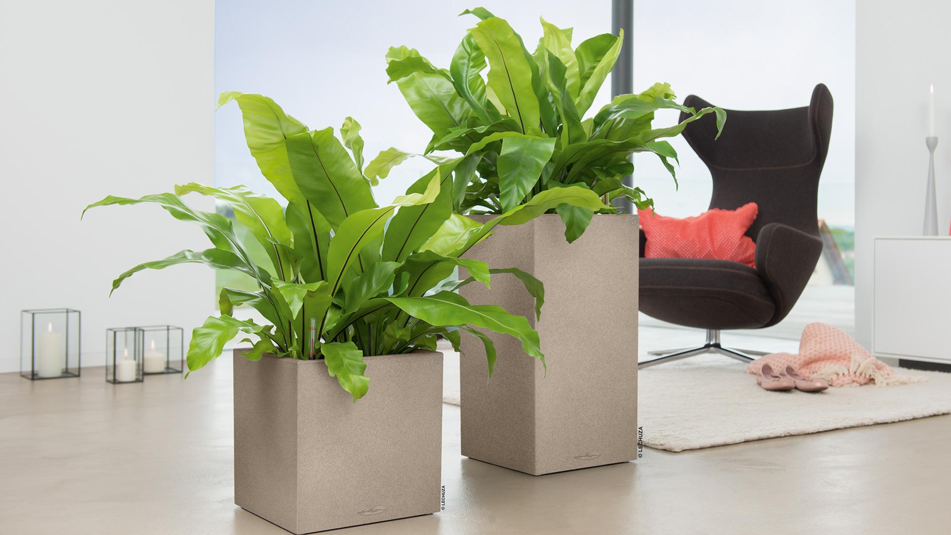 Krukker og grønne planter engros - Growdesign.dk