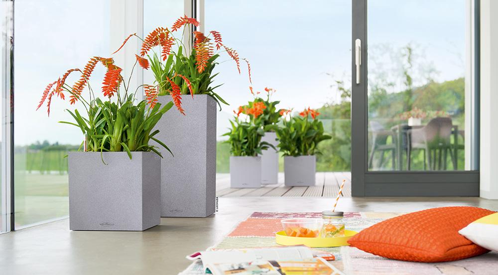 Grå potter, blomster