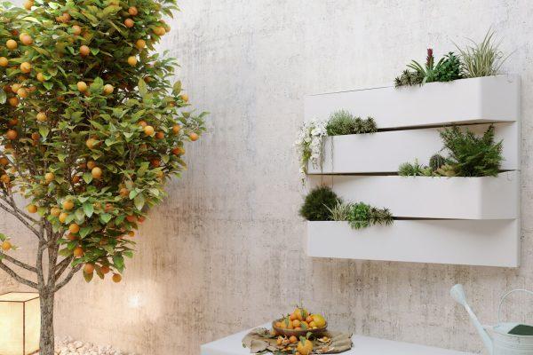 plantevæg, citrus