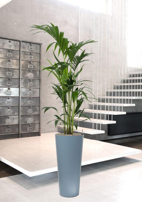 plants, interior,