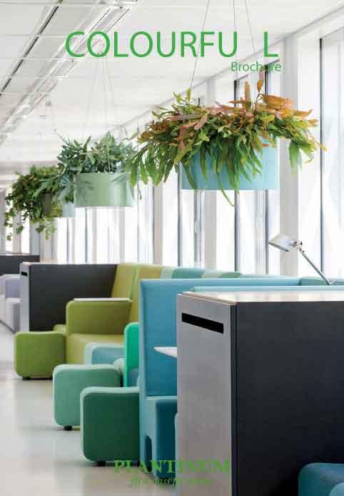 Plantinum Colourful
