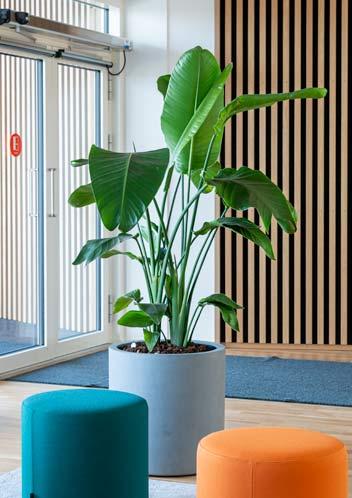 Graa krukker, webshop, plante,
